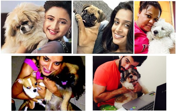 Television stars with their cats & dogs
