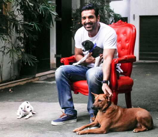 john abraham for pets, animal welfare