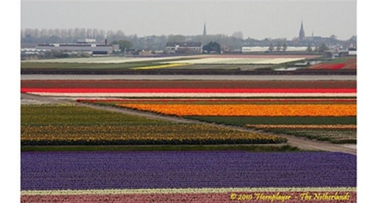 keukenhof, netherlands, garden of europe