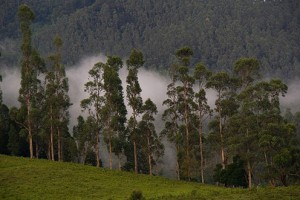 Kodaikanal in Tamil Nadu in monsoon