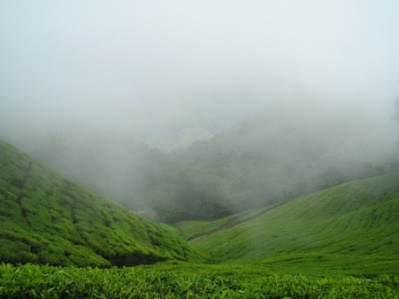 Munnar in Kerala in monsoon