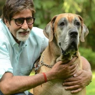 Amitabh Bachchan's Pets PhotoShoot for Magazine Cover